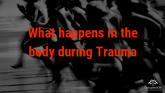 What happens in the body during Trauma
